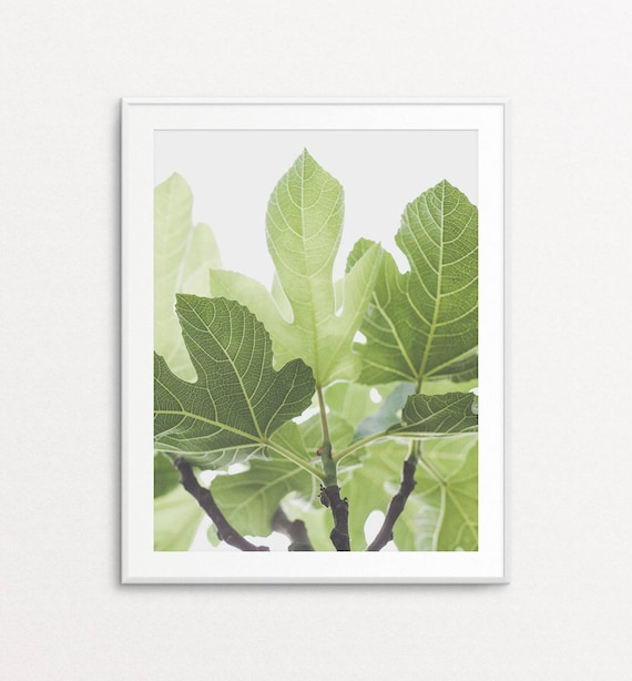 Fig Tree Photo - Fig Tree Print, Botanical Print, Botanical Photograph, Nature Photography, French Countryside, Green