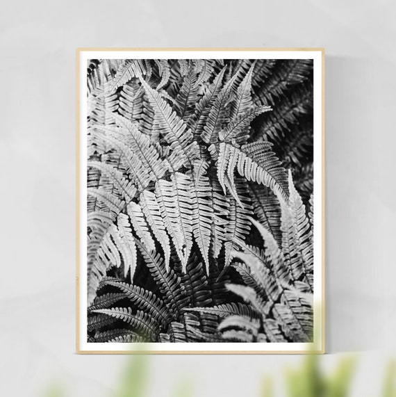 Ferns Print - Ferns Wall Art, Botanical Photography, Home Decor, Botanical Art Print, Ferns Wall Art
