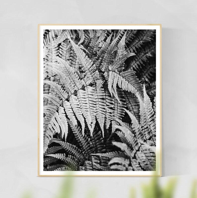 Ferns Print  Ferns Wall Art Botanical Photography Home image 0