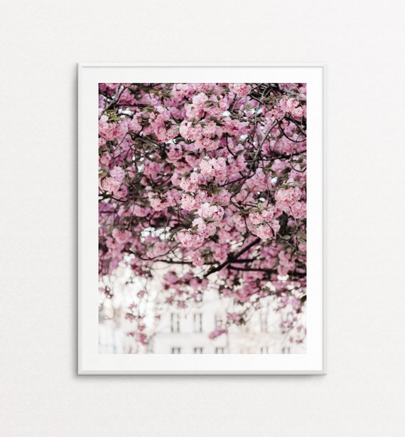Paris Photography - Paris Wall Art, Paris Print, Paris Decor, Home Decor, Paris Bedroom Decor, Paris Cherry Blossoms, Paris Springtime,