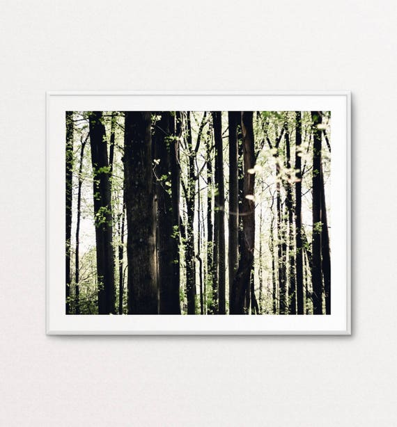 Nature Photography, Forest Photo, Dreamy Photography, Home Decor, Fine Art Photography, Quiet Photography, Woods Photograph, Nature Wall Art