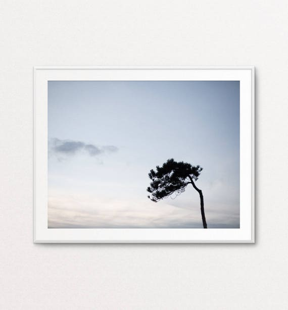 Nature Photography, Leaning Pine Tree, Home Decor, Fine Art Photography, Quiet Photography, Nature Wall Art, Large Nature Wall Art