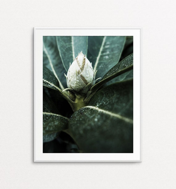 Rhododendron Print - Rhododendron Art, Rhododendron Botany Art, Rhododendron Wall Art, Home Decor, Botanical Art Print