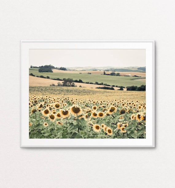 Sunflowers Photo, French Country Photograph, Sunflowers Print, French Country Decor, French Country Print, Home Decor