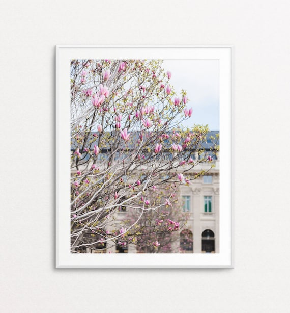 Paris Spring Photo, Paris Photography, Paris Print, Paris Decor, Pink Magnolias, Paris Wall Art, Paris Pictures, Paris Bedroom Decor