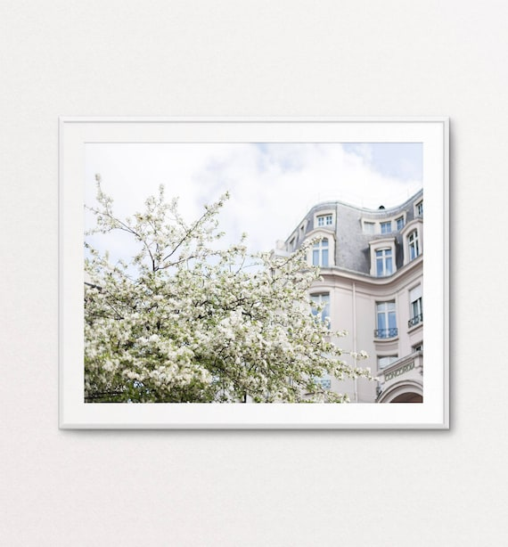 Paris Photography - Cherry Blossoms in Paris, White Blossoms, Paris Wall Art, Paris Print, Paris Decor, Home Decor, Paris Bedroom Decor