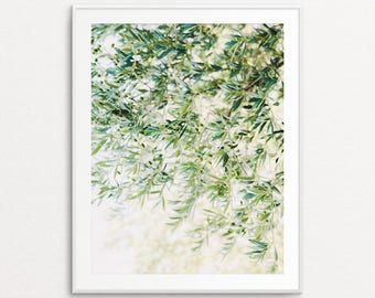 Olive Branches Photo - Olive Branches Print, Botanical Print, Botanical Photograph, Nature Photography, Botanical Wall Art Print