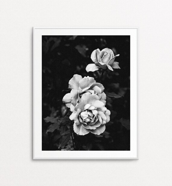 Roses Photograph - Roses Wall Art, Floral Photography, Paris Decor, Home Decor, Floral Print Art, Floral Wall Art