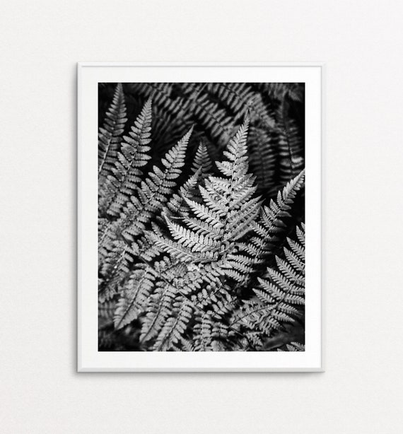 Fern Print - Fern Art, Fern Wall Art, Botanical Photography, Home Decor, Botanical Art Print