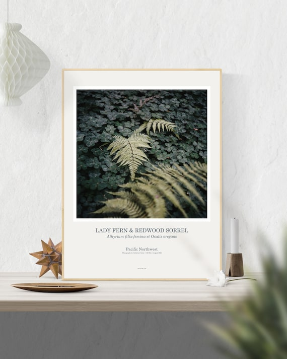 Botanical Art Print: Lady Fern & Redwood Sorrel, Fern Poster, Fern Wall Art, Fern Print, PNW Art