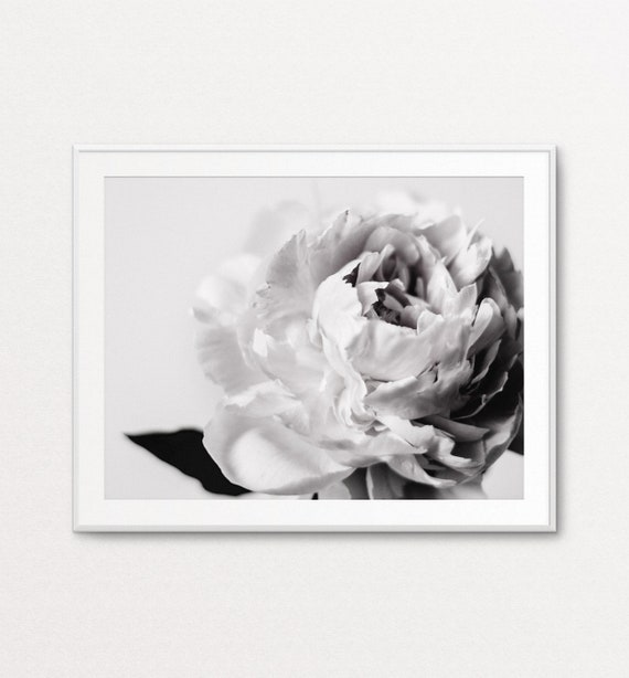 Peonies Print, Peony Print, Floral Photography, Floral Print, Black and White Peonies, Floral Decor, Floral Wall Art, Peonies Wall Art