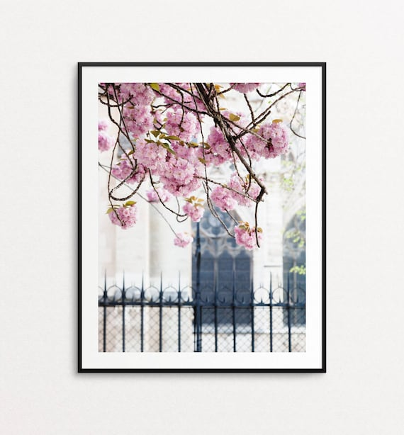 Paris Photography - Cherry Blossoms in Paris, Springtime in Paris, Paris Wall Art, Paris Print, Paris Decor, Notre Dame, Paris Bedroom Decor