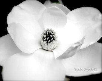 White Magnolia Flower Photograph, Black and White Flower Print, Garden Fine Art Photography, Nature Photo, Macro Blossom Modern Wall Decor