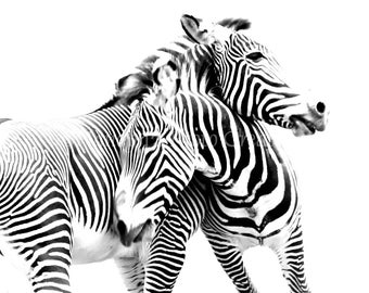 Nature Photography, Zebra Print, Nursery Decor, Animal Photography Black and White Photography Fine Art Print Black & White Wall Art fPOE