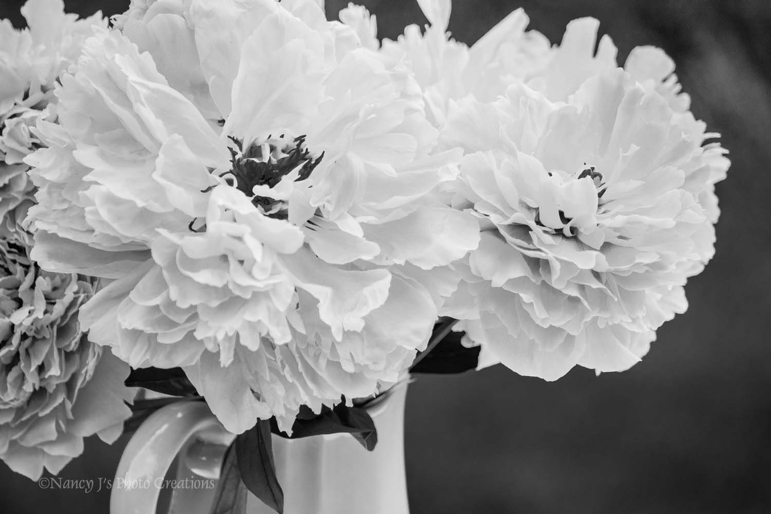 Peony Art Black And White Photography Pale Pink Wall Art Etsy
