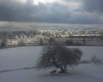 Outdoor winter photo