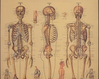 italian paper vintage skeletal system