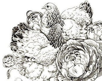 "Art Print - ""Chonky Chooks"" - 6x8 brahma chicken peonies nature illustration"