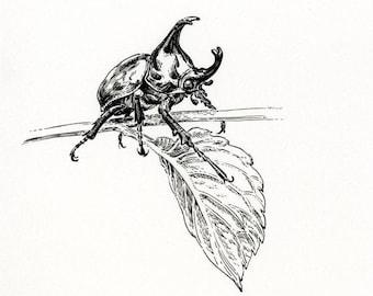 "Original Artwork - ""rhino beetle no.4"" - beetle ink drawing insect illustration bug art"