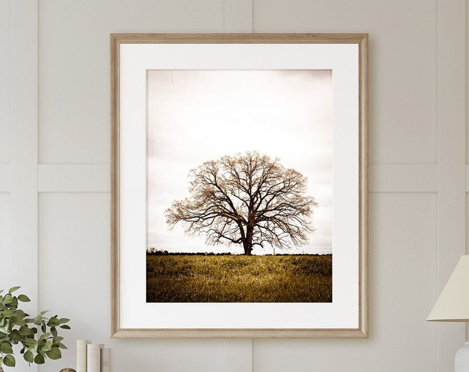 Rustic Oak Tree in the Field Early Spring Landscape Photography Art Print, Canvas or Frame. Serene Rustic Farmhouse Home Decor Artwork.