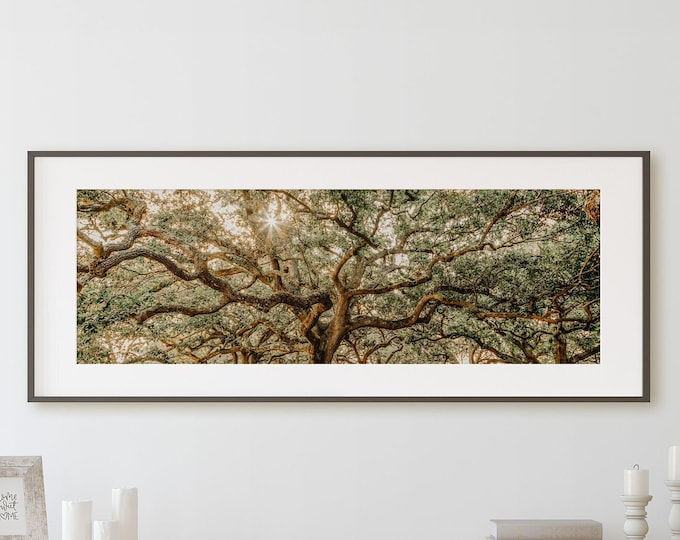 Low Country Wall Art Decor Print or Canvas. Charleston Live Oak Panoramic Tree Canopy. Rustic Tree Canvas Art for Living Room or Bedroom.