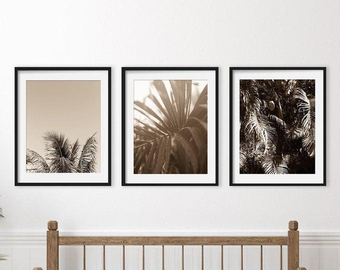 Palm Tree Prints, Tropical Beach Photography, Black and White Botanical Prints, Sepia Coastal Decor, Beach Canvas Set, Palm Tree Wall Art