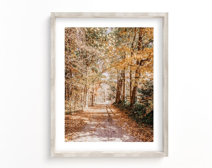 Lane with Autumn Colors on Signal Mountain Tennessee Photography Wall Art Decor Canvas or Print. Serene Country Lane Golden Wall Art.