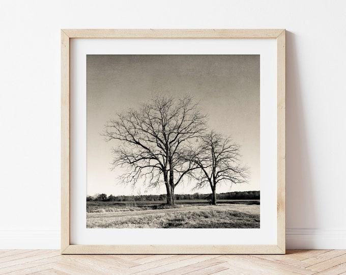Rustic Tree Nature Wall Art Decor, Photography Print, Brown Tree Print, Rustic Home Decor, Custom Framed Tree Print, Canvas or Wood Print