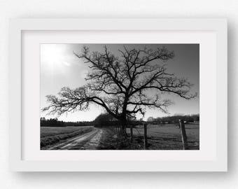 Tree Photography, Large Canvas Art, Black & White Landscape Print, Farmhouse Decor, Rustic Tree Wall Art, Framed Tree Print, Tree Canvas