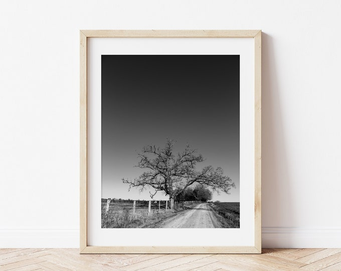 Black and White Tree Landscape over a Country Dirt Road Wall Art Photography Print or Canvas. Rustic Farmhouse Art Print. Custom Framed Art.