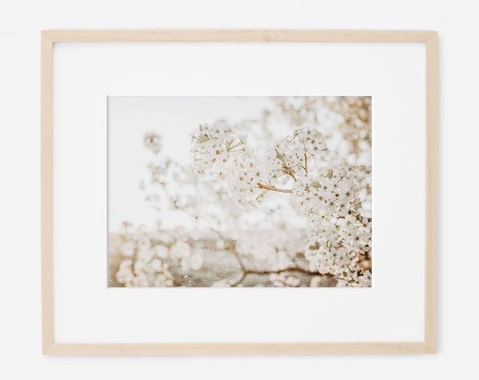 Rustic White Floral Print, Nature Photography, Neutral Wall Art, Rustic Home Decor, Bone White Art, White Flower Picture, Custom Framed Art