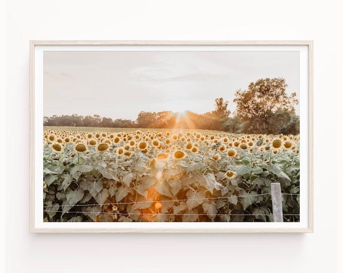 Sunflower Field Wall Art Photography Print, Farmhouse Decor, Country Floral, Sunset Canvas Wall Art, Wood Print Wall Art, or Framed Print