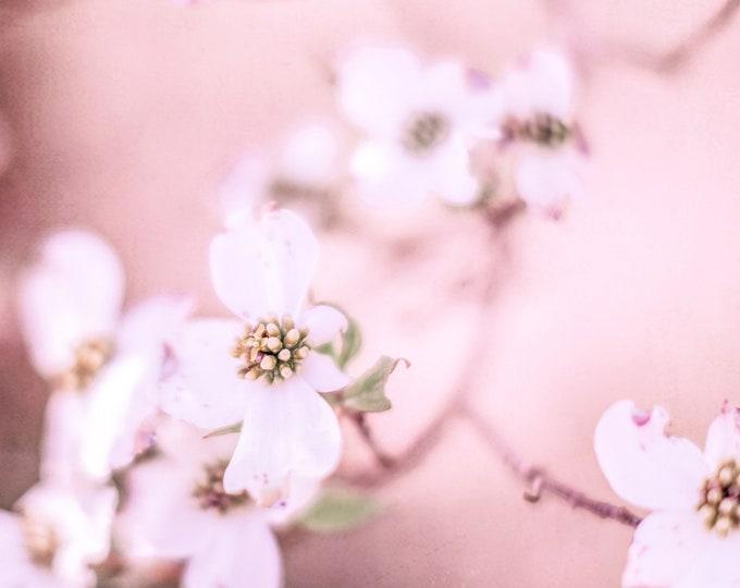 Blush Floral Photography Print, Shabby Chic, Pastel Pink Nursery, Rose Pink Floral, Framed Floral, Pink Floral Canvas, Dogwood, Spring Decor