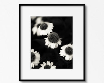 Black & White Floral Print, Daisies, Cone Flowers, Rustic Floral Print, Framed Floral Print, Black and White Floral Canvas, Framed Flower
