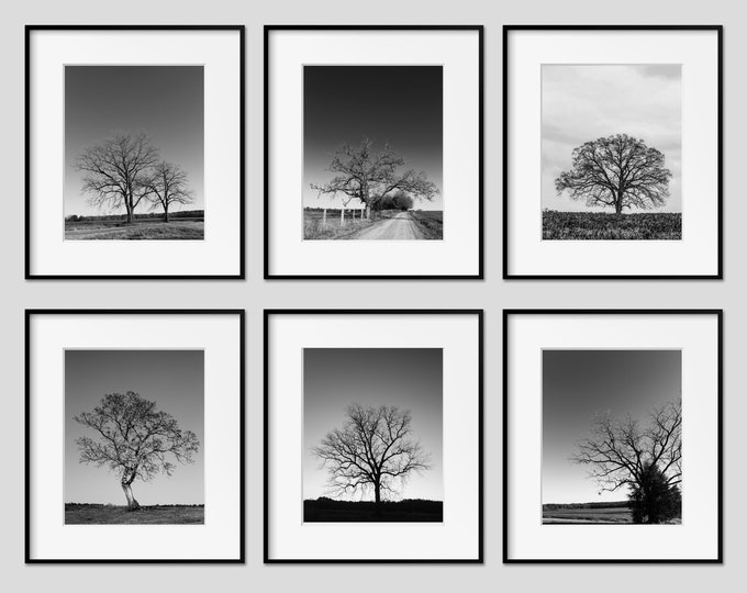 Tree Print Set, Landscape Photography, Farmhouse Wall Art, Rustic Decor, Black & White, Framed Tree Prints, Tree Canvas Set