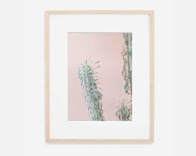 Cactus Print, Succulent Photography, Pink and Green Art, Blush Pink Wall Art, Botanical Art, Desert Wall Art, Large Canvas Print, Boho Decor