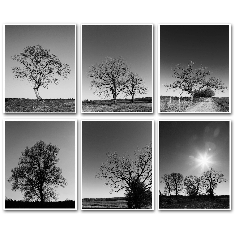 Tree Landscape Photography Prints Farmhouse Decor Rustic Etsy