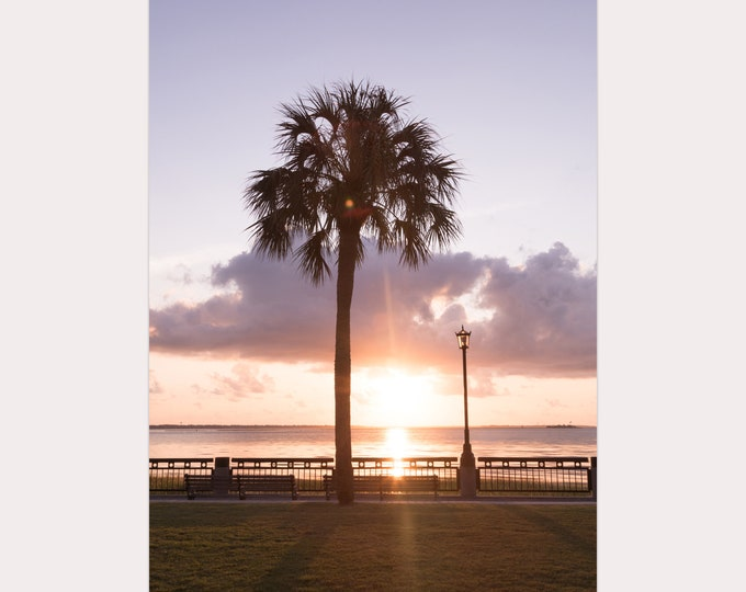 Charleston Photography Print, Sunrise, Charleston Harbor, Waterfront Park, Palm Tree, Coastal Decor, Large Canvas Art, Custom Framed Prints