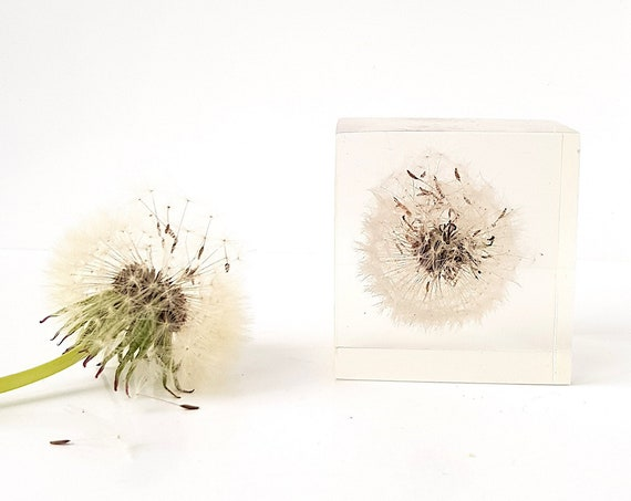 Real dandelion cast in resin, paperweight flower, handmade resin art, home gifts, office decor, dandelion paperweight, dandelion seed puff