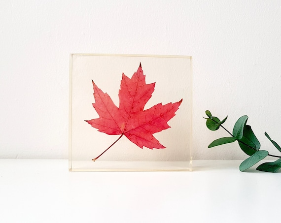 Resin preserved maple leaf, handmade resin paperweight, home decor gift, Canadian gifts, Christmas gifts ideas, maple leaf art, Canada gifts