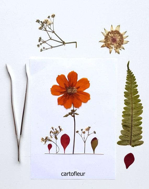 Daniel Rinella 20x C6 cards handmade with pressed flowers