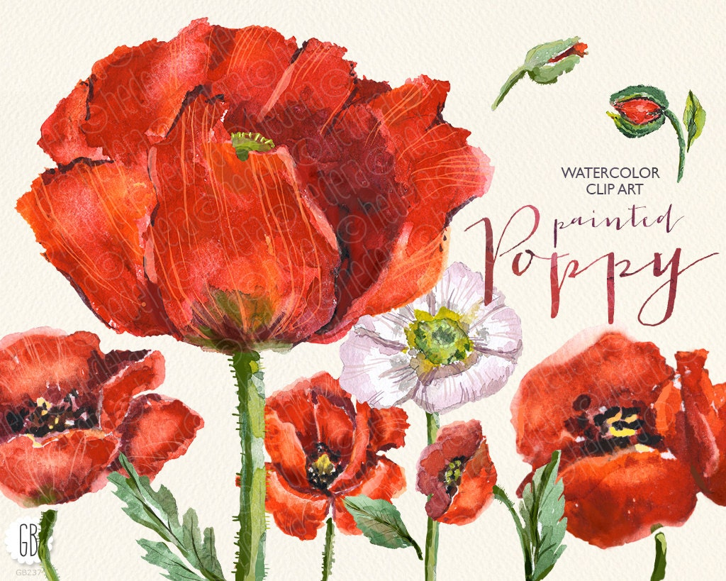 Aquarelle Watercolor Red Wild Poppies Floral Clip Art Etsy
