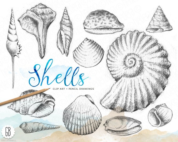 Shells Hand Drawn Pencil Vintage Inspired Shell Drawing Beach Wedding Sea Life Clip Art Coral Reef Stationery Instant Download
