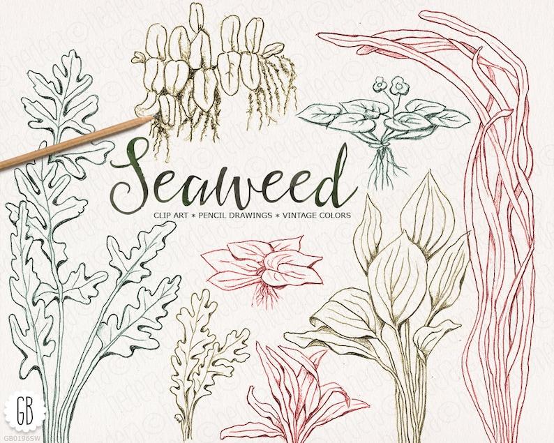 Alghe Erbe Marine Disegnato A Mano Colori Dell Annata Etsy