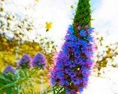 4x6 Flower magnet