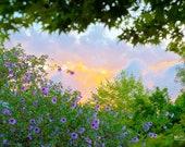 4x6 Backyard sunset