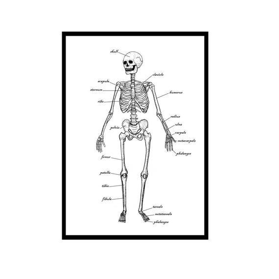 Das menschliche Skelett Grüße Karte / medizinische Diagramm / | Etsy
