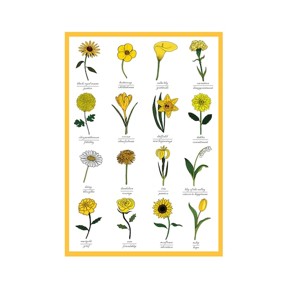 The Language Of Yellow Flowers Identification Of Flower Etsy