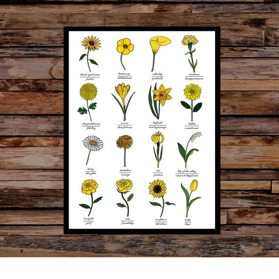 Yellow Flowers Identification Symbolic Meaning Print Wall Etsy