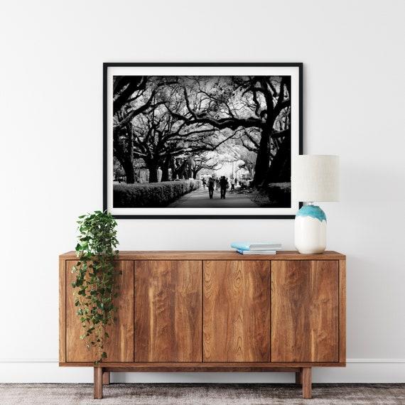 Oak Alley Photo Print, New Orleans Print, Tree Art, Black and White Art